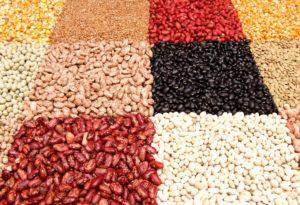Haricots riches en proteines et en fer