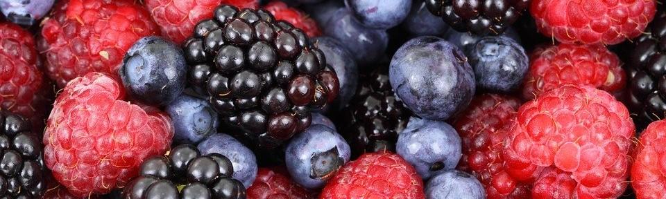 Alimentation pauvre en glucides