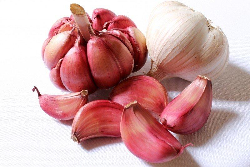 garlic purple garlic head of garlic clove of garlic