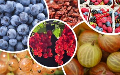 Indice ORAC - Bienfait, aliments, valeurs