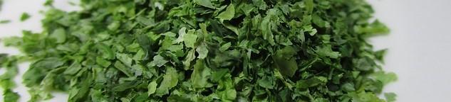 algues valeurs antioxydantes élevée après extrait