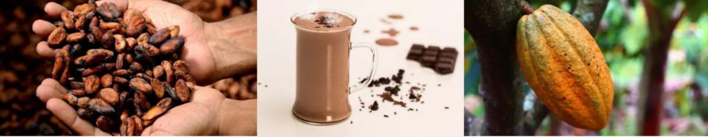 Le cacao contient énormément de zinc