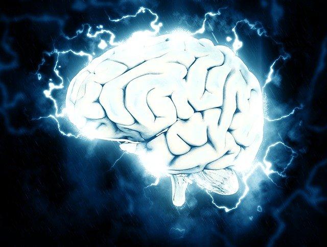 amélioration des capacités cérébrales avec le ginko biloba