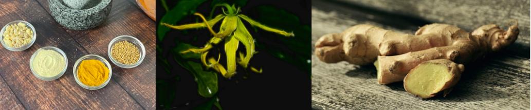 plantes aphrodisiaques pour augmenter sa libido