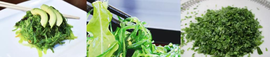 les algues sont un aliment intéressant pour les apports calciques