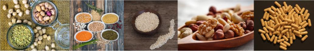 les sources de zinc pour les végétariens et végétaliens
